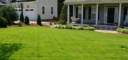 This is a front yard of Zeon Zoysia.